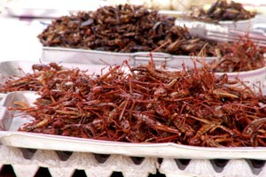17-12-09 - Grasshoppers