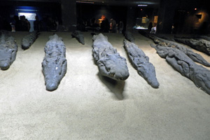 16-02-13 - Mummified Crocodiles in the museum of Kom Ombo