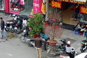 16-02-15 - Tet-Festival - Trees gets transported